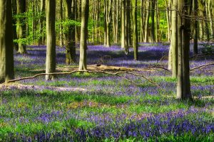 lavender flowers in forest wallpaper background