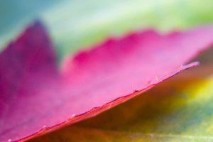 leaf close up wallpaper background
