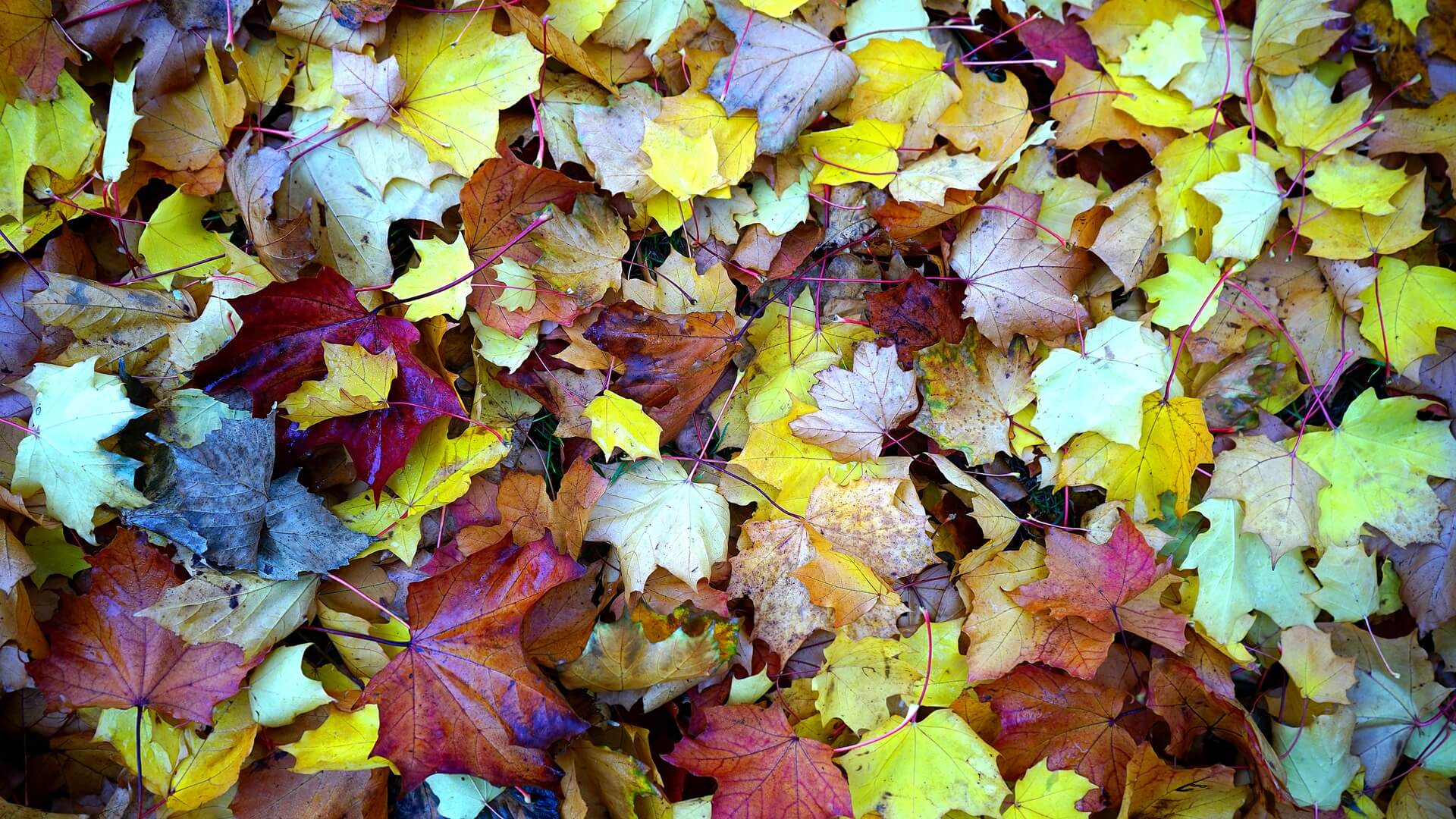 leaves on ground wallpaper background
