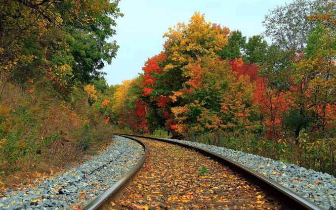 leaves on rail track wallpaper background