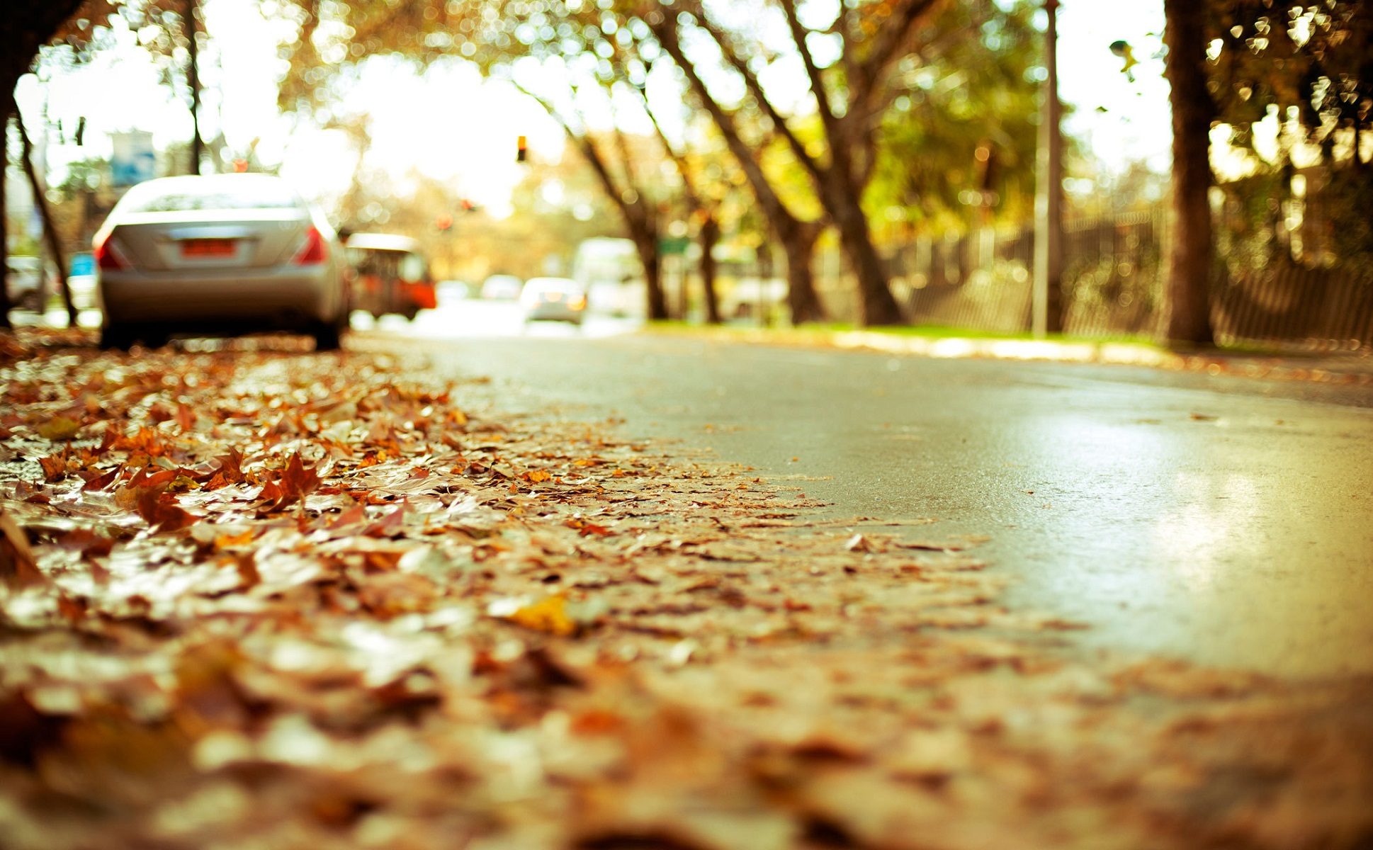 leaves on road wallpaper background