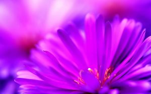 Light Purple Flower Wallpaper