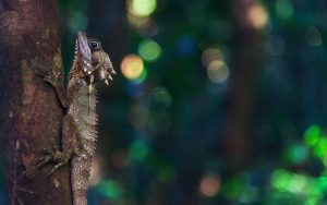 Lizard 5K Wallpaper Background