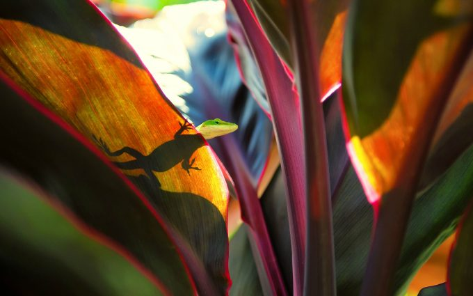 lizard on leaf 4k wallpaper