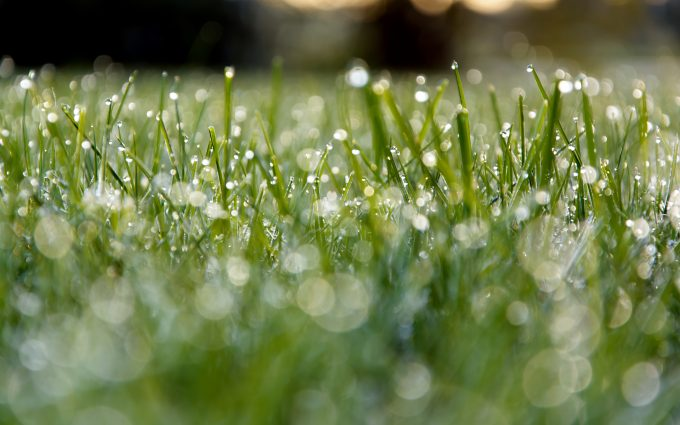 meadow dew grass wallpaper background