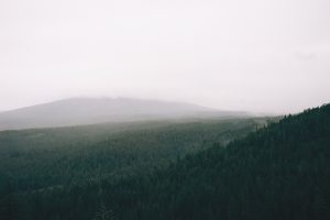 mountain forest wallpaper background