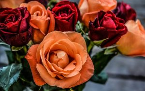 Orange and Red Roses Wallpaper