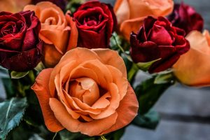orange and red roses wallpaper background