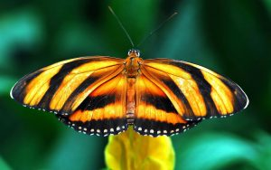 Orange Butterfly Widescreen Wallpaper