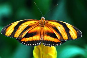 orange butterfly widescreen wallpaper background