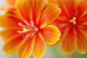orange flower close up wallpaper 4k 5k background