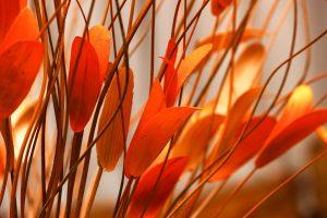 Orange Leaves Wallpaper 4K 5K Background