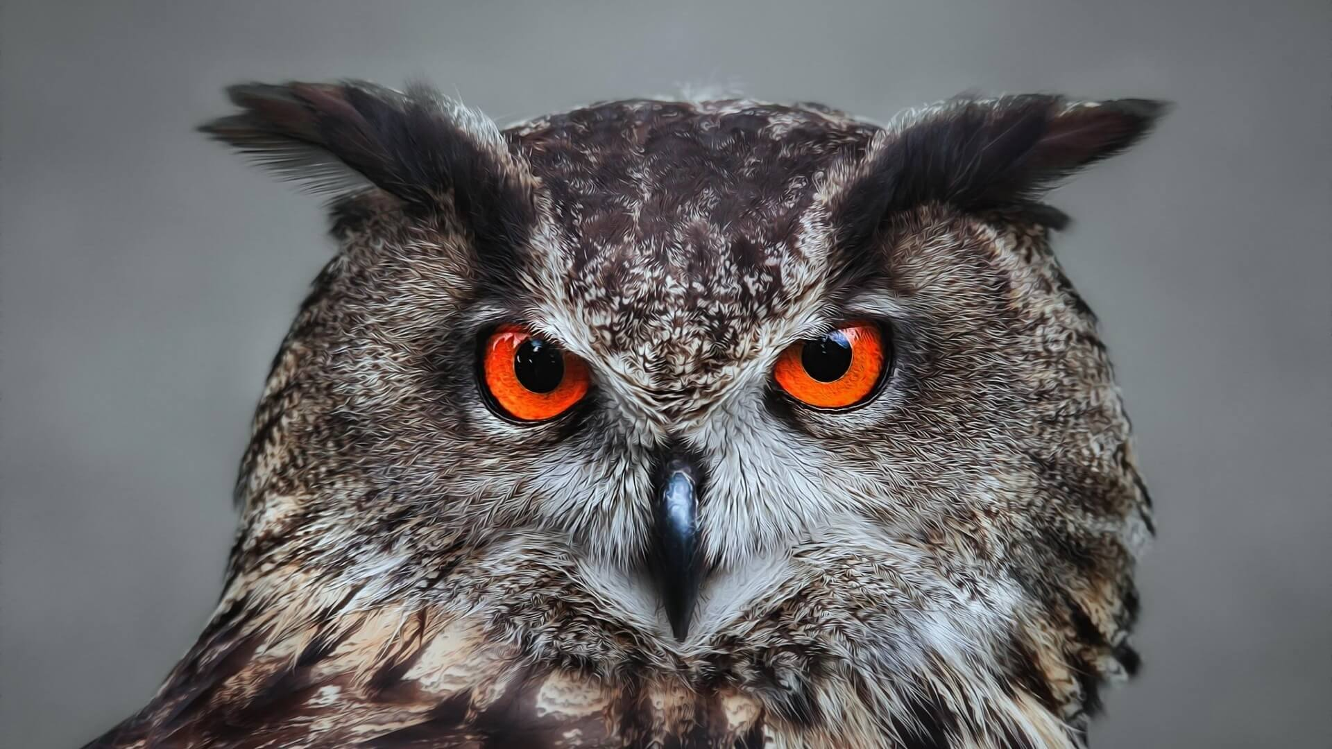 owl wallpaper background