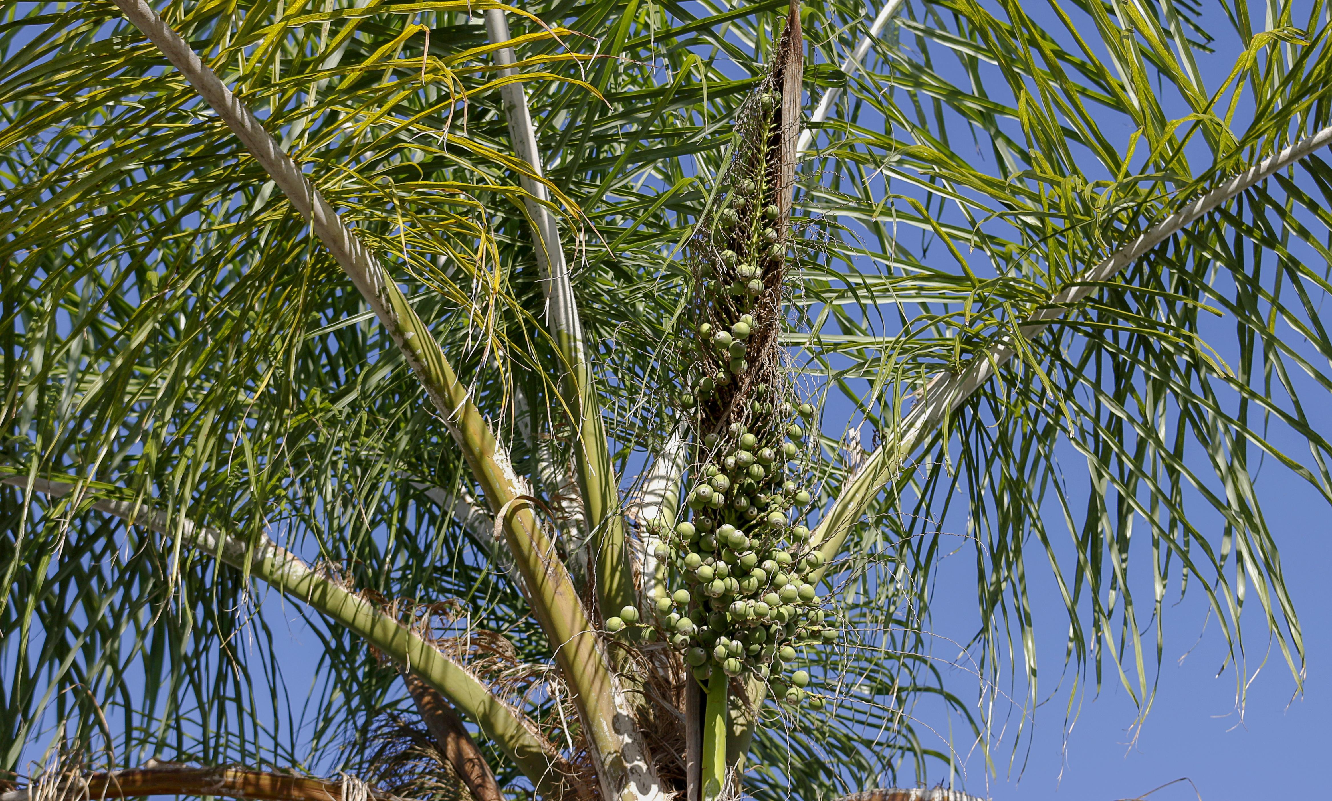 palm tree wallpaper 4k background