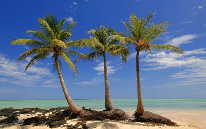 palm trees on island wallpaper background