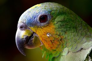 Parrot Close Up 4K Wallpaper