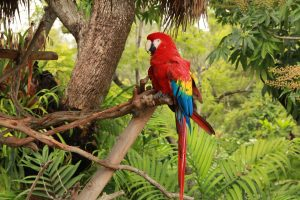parrot on tree wallpaper background