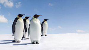Penguins on Snow Wallpaper