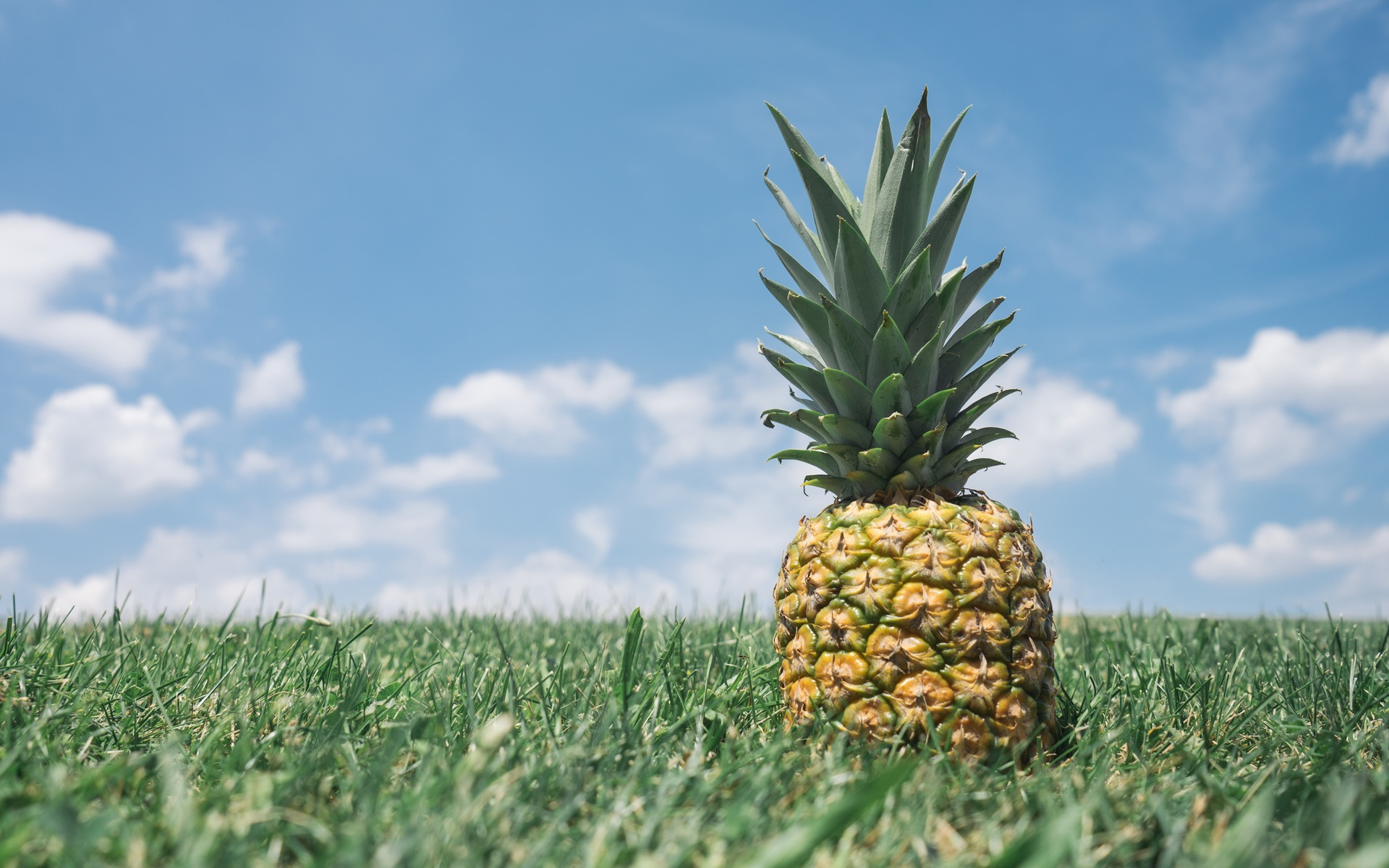 pineapple in grass wallpaper background