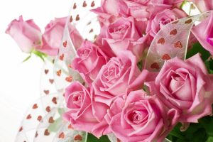 pink roses wallpaper background, wallpapers