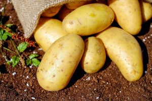 potatoes wallpaper background, wallpapers
