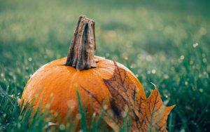 Pumpkin in Grass Wallpaper