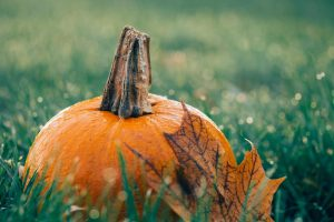 pumpkin in grass wallpaper