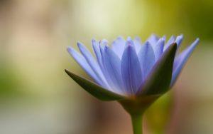 Purple Flower Close Up Wallpaper