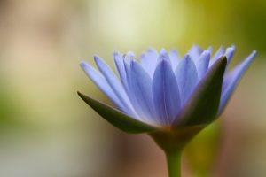 purple flower close up wallpaper background