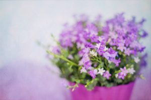 Purple Flowers Bouquet Wallpaper