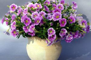 purple flowers vase wallpaper background