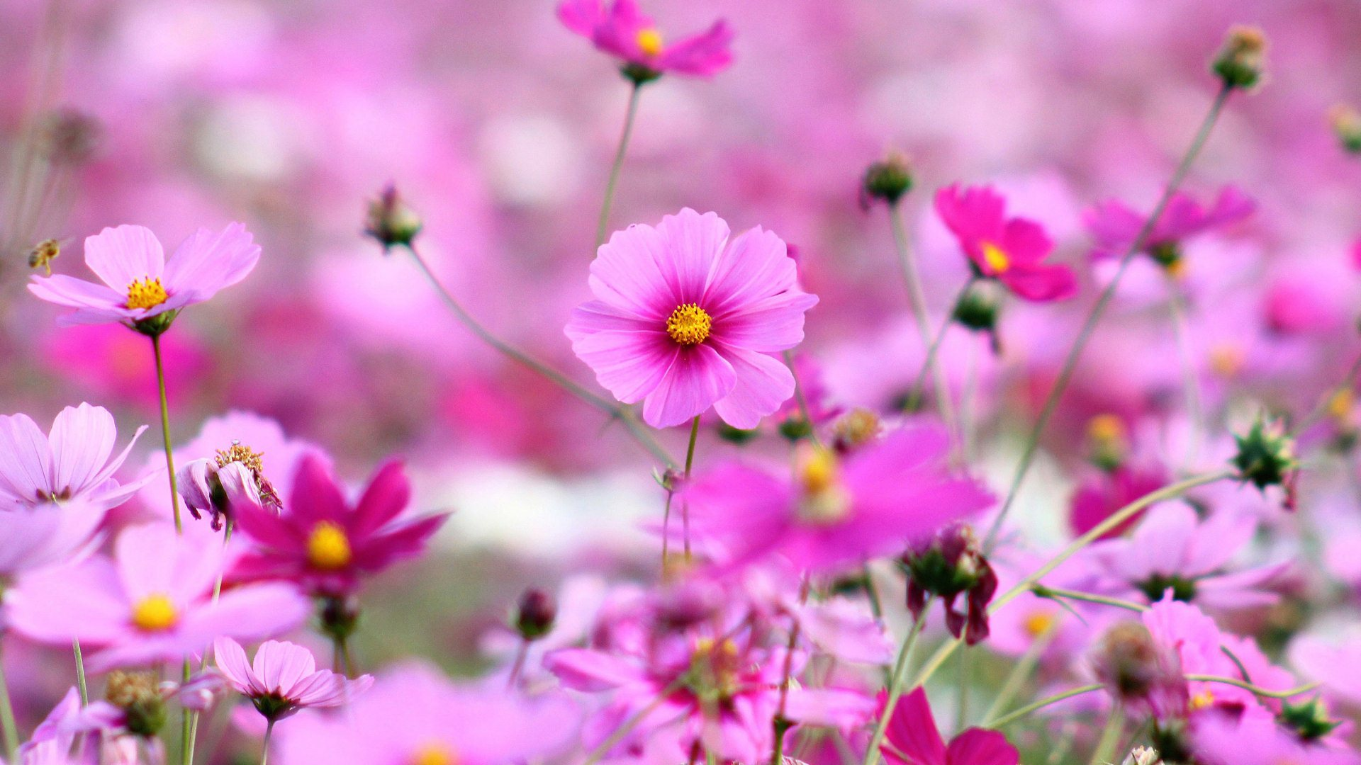 purple flowers wallpaper background