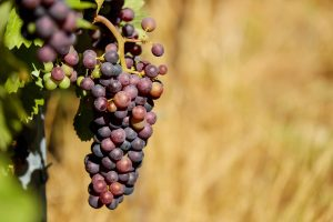 purple grapes wallpaper background, wallpapers