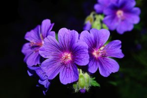 Purple Petaled Flower Wallpaper 4K