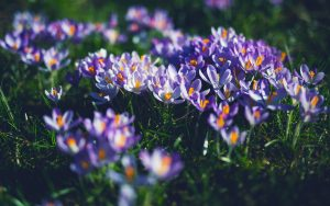 Purple Petaled Flowers Wallpaper