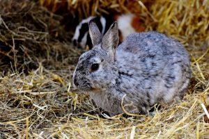 Rabbit 4K 5K Wallpaper Background