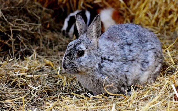 rabbit 4k 5k wallpaper