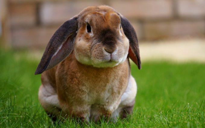 rabbit in grass wallpaper 4k background