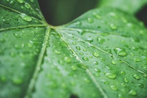 raindrops on green leaf 4k wallpaper