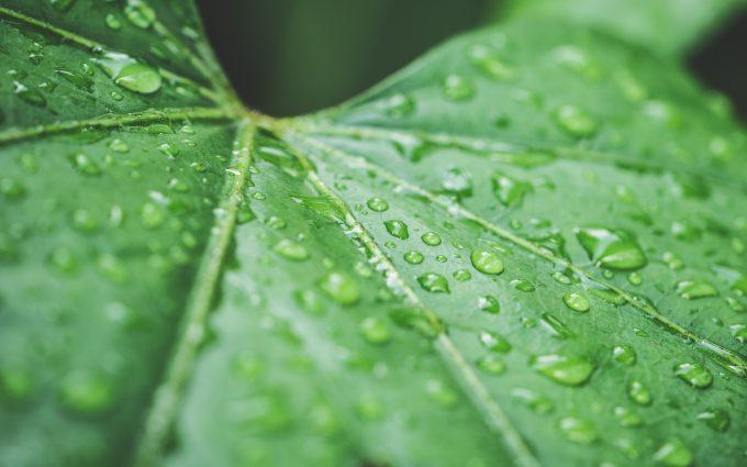 raindrops on green leaf 4k wallpaper