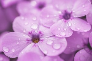 raindrops on violet flower 4k 5k wallpaper