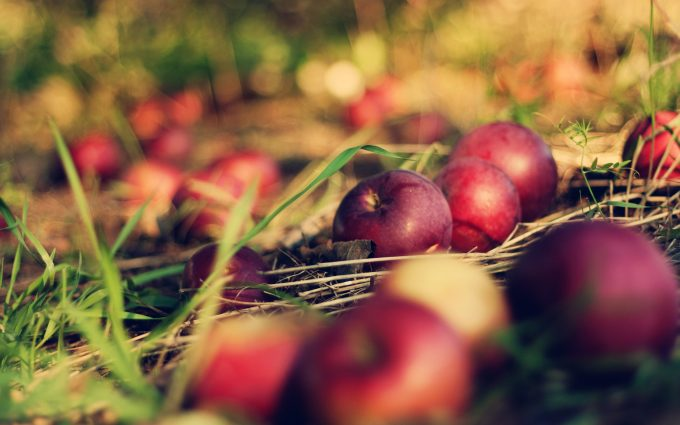 red apples close up wallpaper