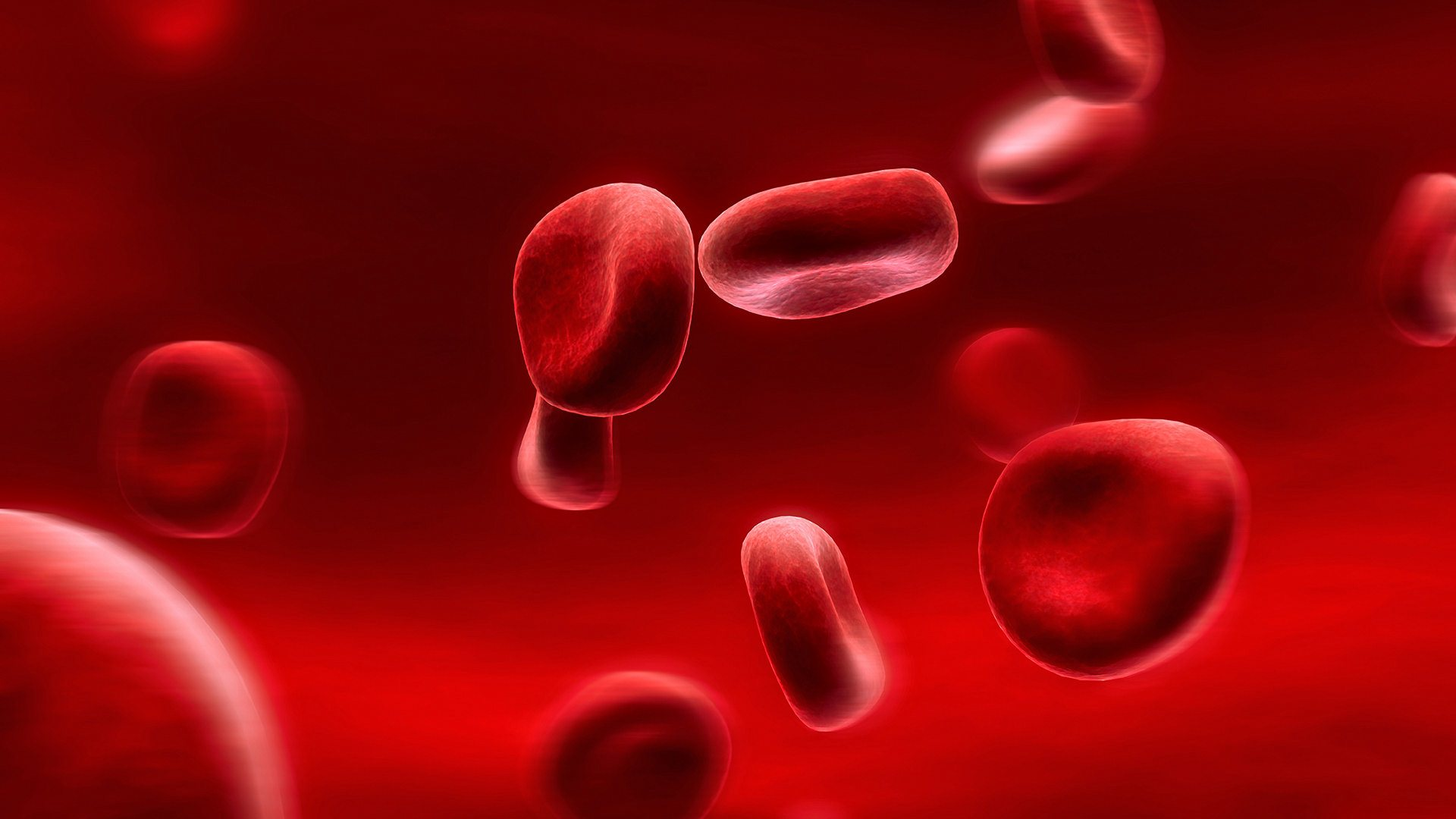 red blood cells wallpaper background