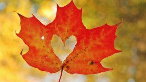 Red Leaf Heart Wallpaper Background