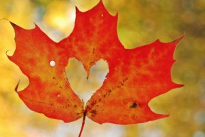 red leaf heart wallpaper background