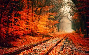 Red Leaves on Rail Track Wallpaper
