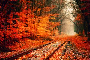 red leaves on rail track wallpaper background