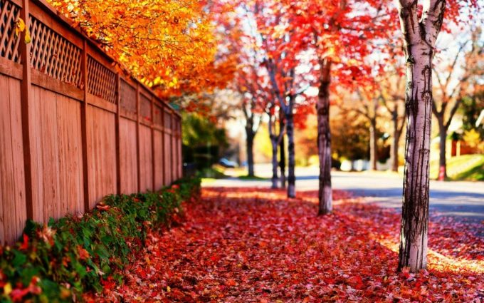 red leaves widescreen wallpaper background, wallpapers
