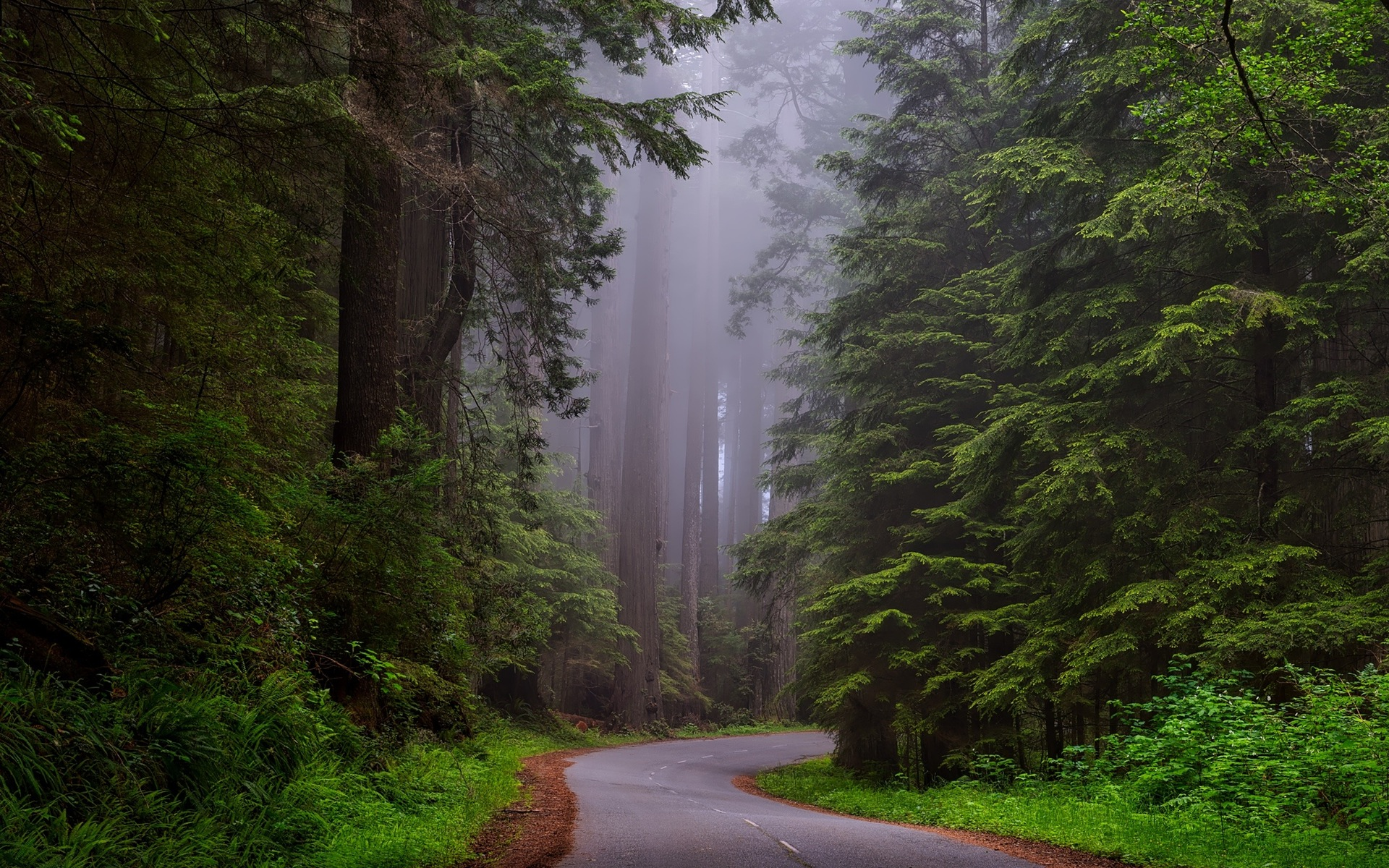 redwood national park wallpaper background