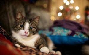 Relaxing Cat Wallpaper Background